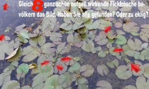 Suchbild Frösche